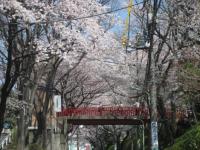 大田区の桜坂
